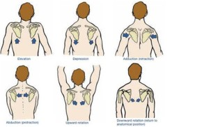 shoulder positions